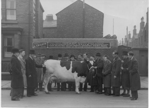 Cow Keeper Outside Dairy in Central Liverpool